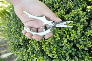 Master-Gardener-Pruner-Secateurs-Shears-Garden-Hand-plants-Shears-trim-cutter-easy-carry-Garden-Tool